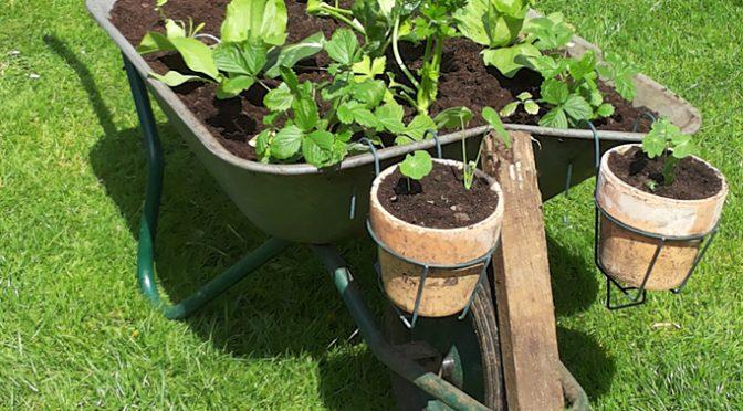 Schubi in Rente und der Garten grünt