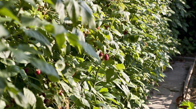 Gartenrundgang Feb | Gartengemüsekiosk
