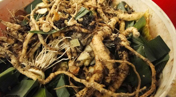 Bokashi Teil 1 | Gartengemüsekiosk