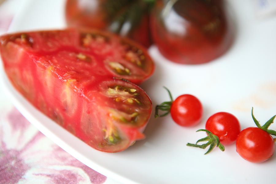 Tomaten selber anbauen