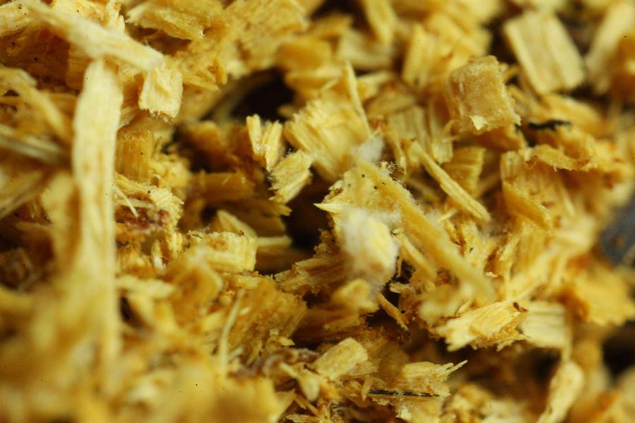 Pilze selber züchten