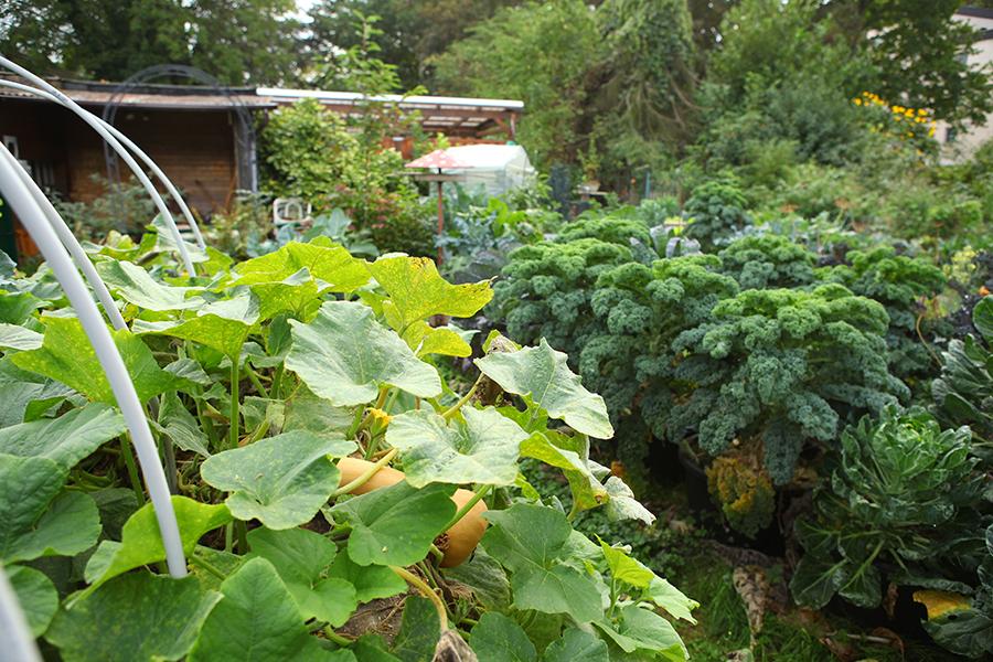gartenrundgang_oktober_1002___1309 - Selbstversorgung im Gartengemüsekiosk