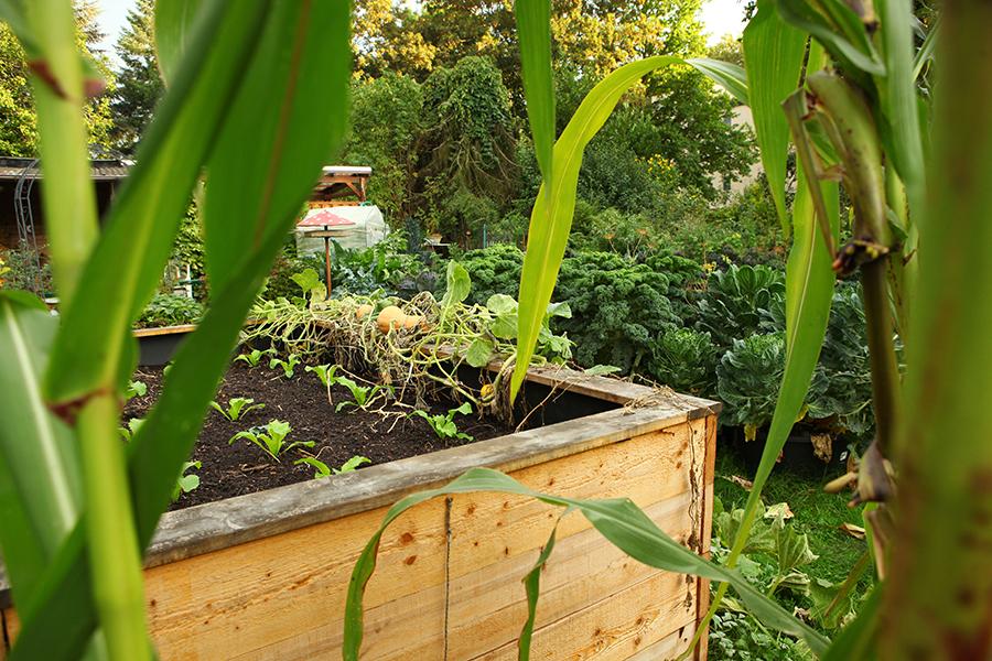 Gartenrundgang Oktober