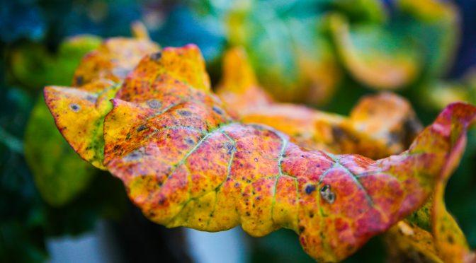 Gartenrundgang November | Herbst
