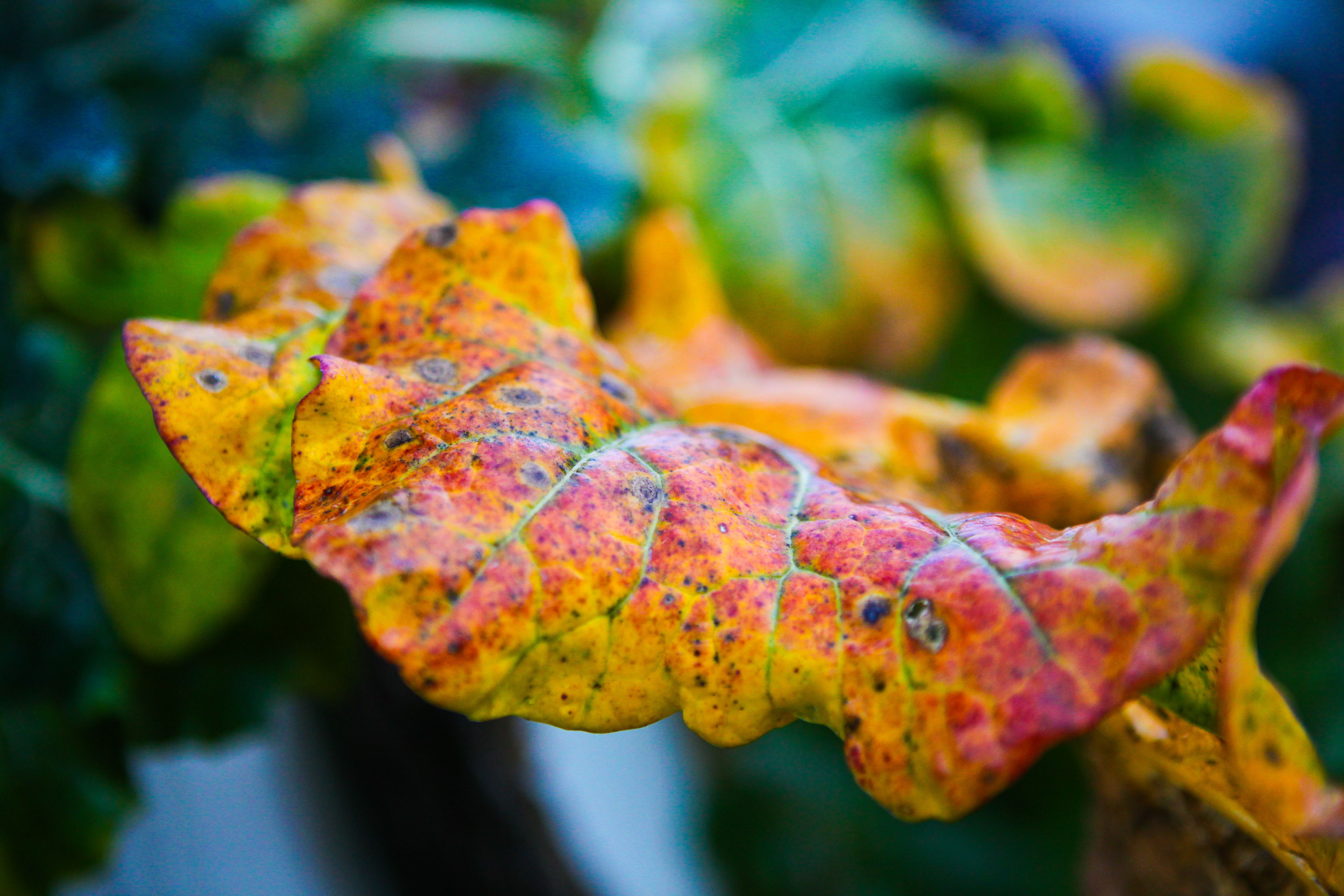 Gartenrundgang November