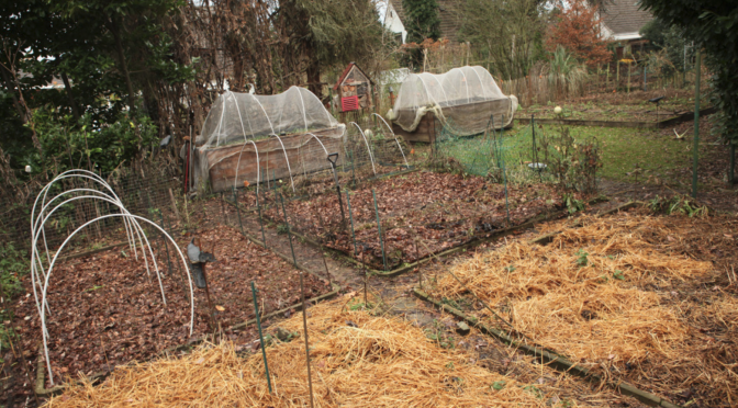 Gartenrundgang Dezember, ruhig und beschaulich