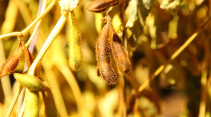 FAQ, Sojaanbau, Gartengeräte und unser Selbstversorgergarten