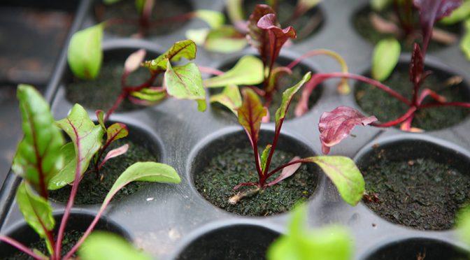 Gartenrundgang März