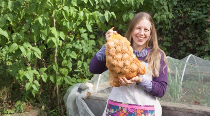Kartoffeln pflanzen und ernten, ein Experiment