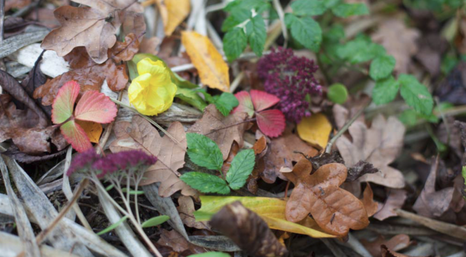 Aussaat Tipps für November | Vorratskeller