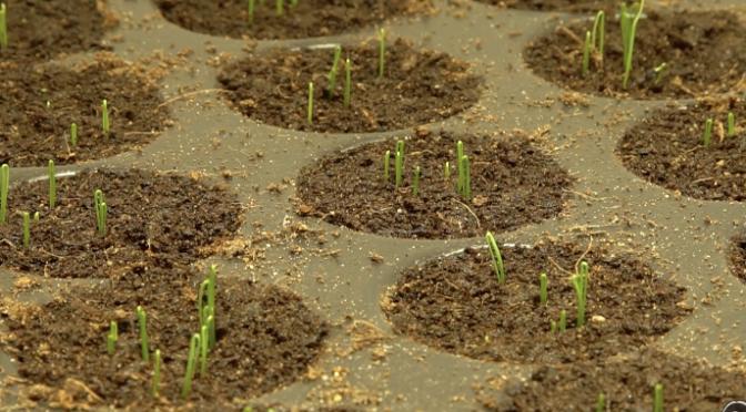 Gartenrundgang Januar, Start der Jungpflanzenanzucht
