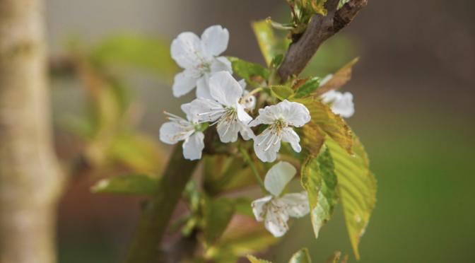 Gartenrundgang April, Frühling!
