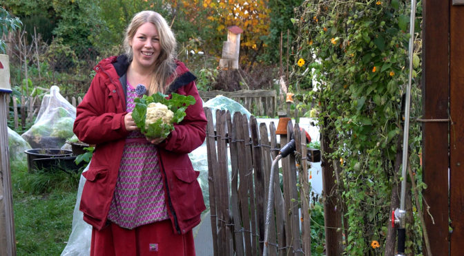 Blumenkohl anbauen für den Herbst