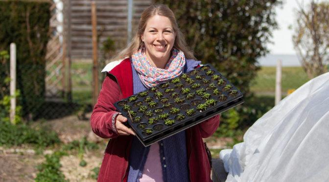 Gemüseanbau und Aussaaten im Mai