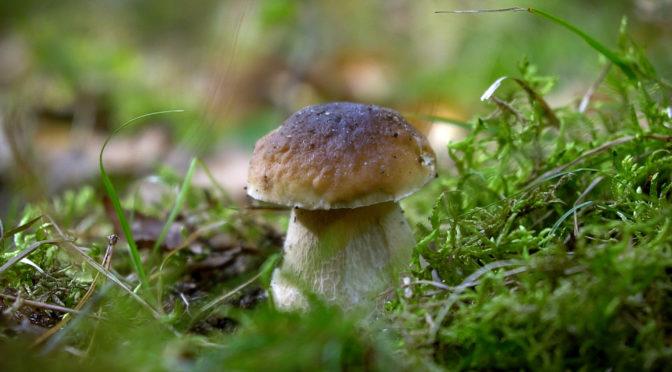 Pilze ohne Ende